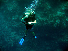 Phi Phi Islands Diving